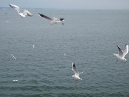 群れ飛んでいます(^^;)