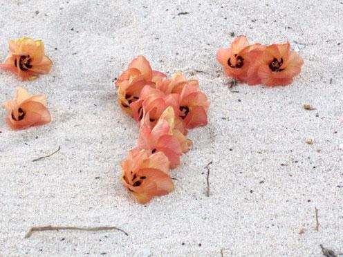 ビーチの花