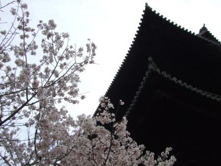 南禅寺山門と桜