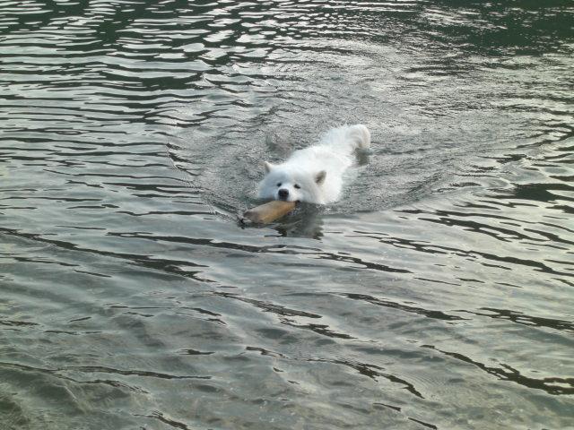 上手に泳ぎます.jpg