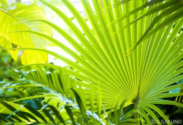 tropical1024W7875.jpg