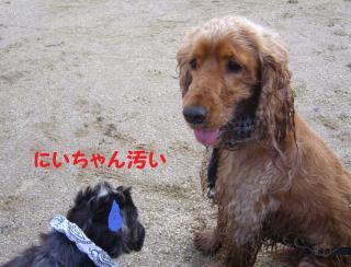 sarasara_convert_20080604231704.jpg