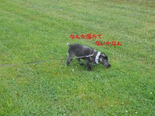 sasa_convert_20080604234916.jpg