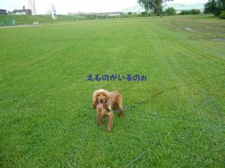 tobitobi_convert_20080604233125.jpg