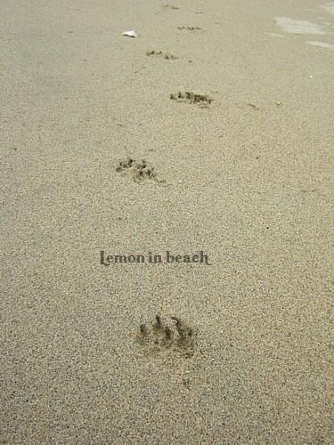可愛い足跡がいっぱい♪