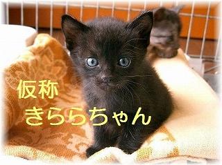 ☆きららちゃん