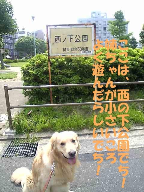 01西の下公園.jpg