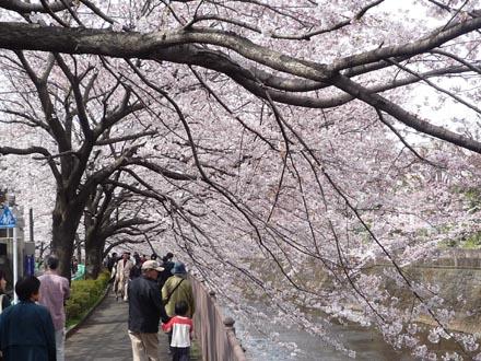 恩田川の桜 09-04-04 ④