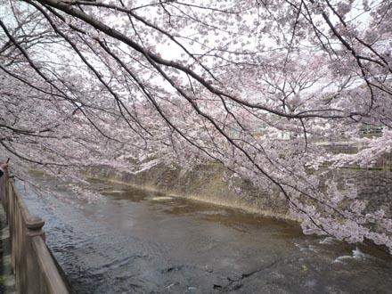 恩田川の桜 09-04-04 ⑥