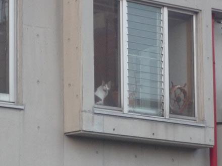 出窓でお帰凛①
