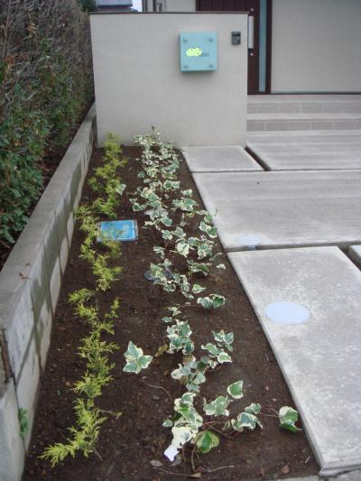 玄関前の葉っぱ