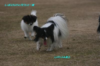 LAYLAと侑士