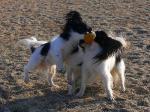 ボールは私のものよ!(ミニィ) 僕のものだよ!(ソロ)