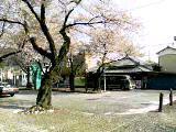 ekisakura.jpg