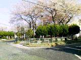 ekisakura2.jpg