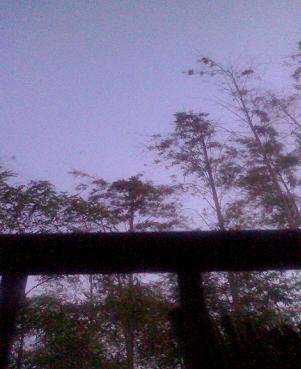 朝 窓より3