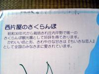 20070706100334.jpg