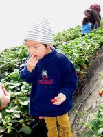 イチゴ狩り⑤