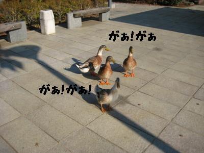 IMG_4349_1.jpg