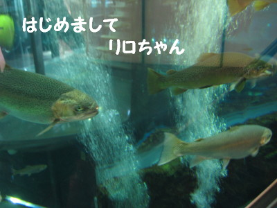 IMG_5631_1.jpg