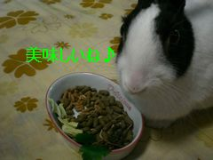 CIMG1543.jpg