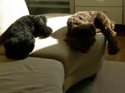 ソファーでねむねむ…