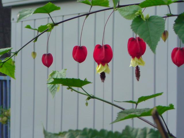 お花(赤)