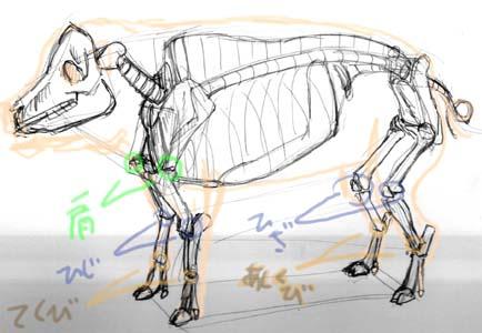 豚骨格模式図