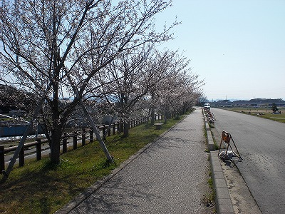 桜吹雪に~
