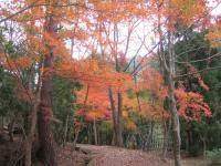 虹の滝キャンプ場-5