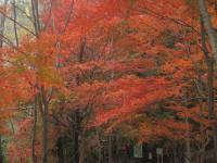 虹の滝キャンプ場-7