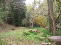 虹の滝キャンプ場-10
