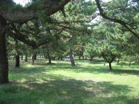 種崎千松公園-14