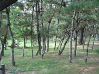 種崎千松公園-15