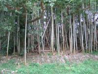 加田キャンプ場-12