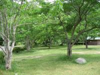 萩阿武川温泉キャンプ場-22
