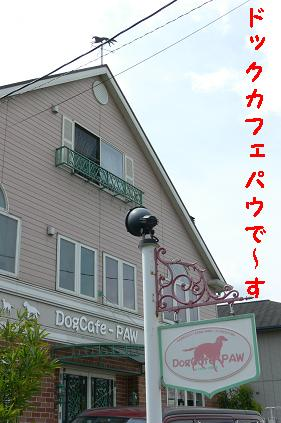 DogCafe-PAW(ドッグカフェパウ)