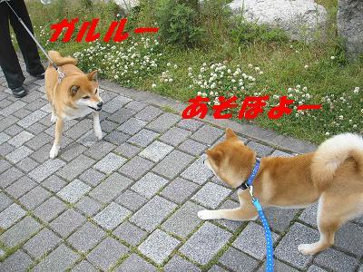 犬にがて?