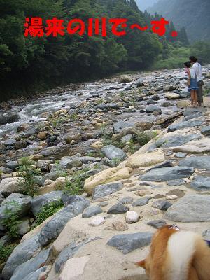 湯来の川です