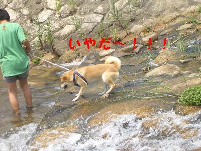 川はいやだよ~