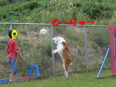 ボール遊びが大好き!