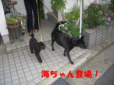 海ちゃん登場!