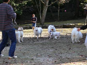 楽しく遊ぶ犬たち