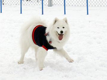 テヘ!雪大好き