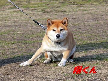 翔くん登場!