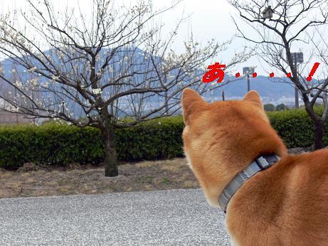 梅も咲いてるね!