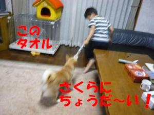 P1010759_convert_20080620235226x