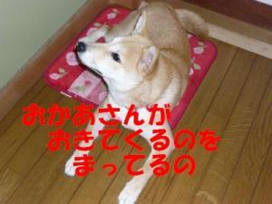 P1010740_convert_20080622164813x