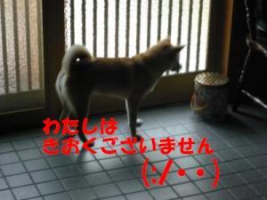 P1010731_convert_20080622164419x