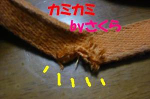 P1020430_convert_20080705000839x